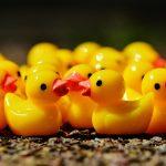 ducks-1339549_1280